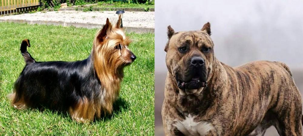 Perro de Presa Canario vs Australian Silky Terrier