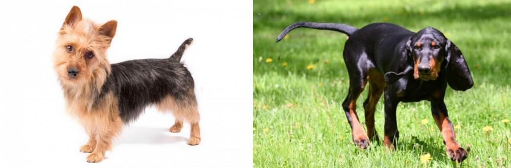 Black and Tan Coonhound vs Australian Terrier