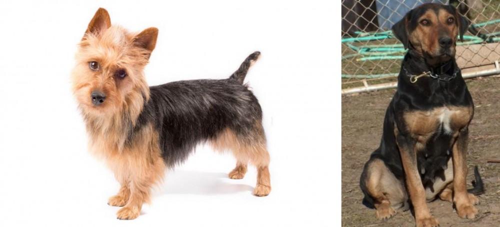 New Zealand Huntaway vs Australian Terrier