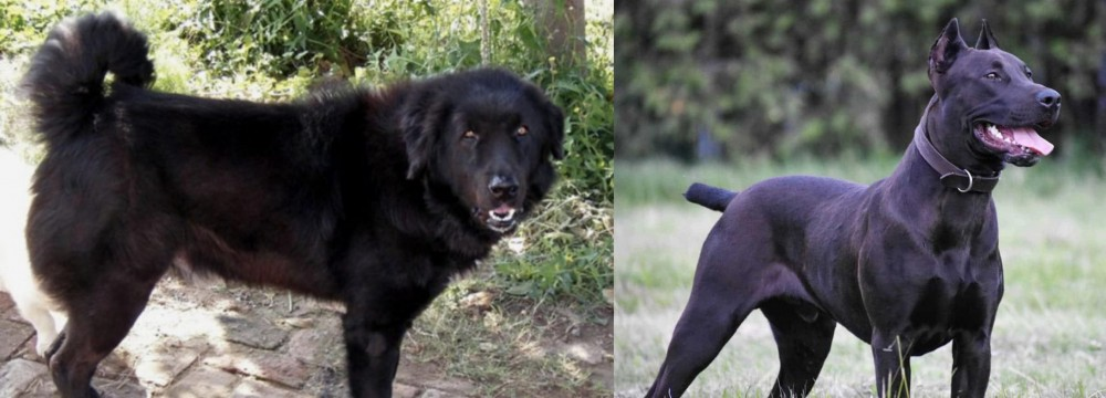 Canis Panther vs Bakharwal Dog