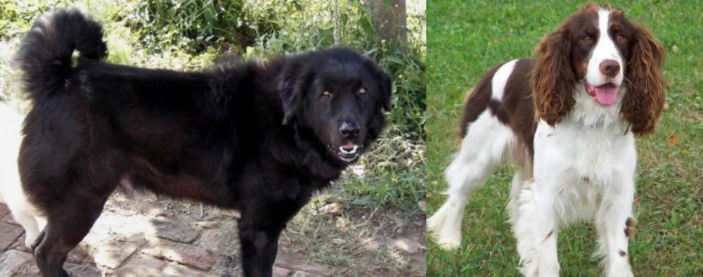 English Springer Spaniel vs Bakharwal Dog