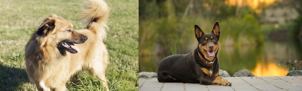 Basque Shepherd vs Australian Kelpie