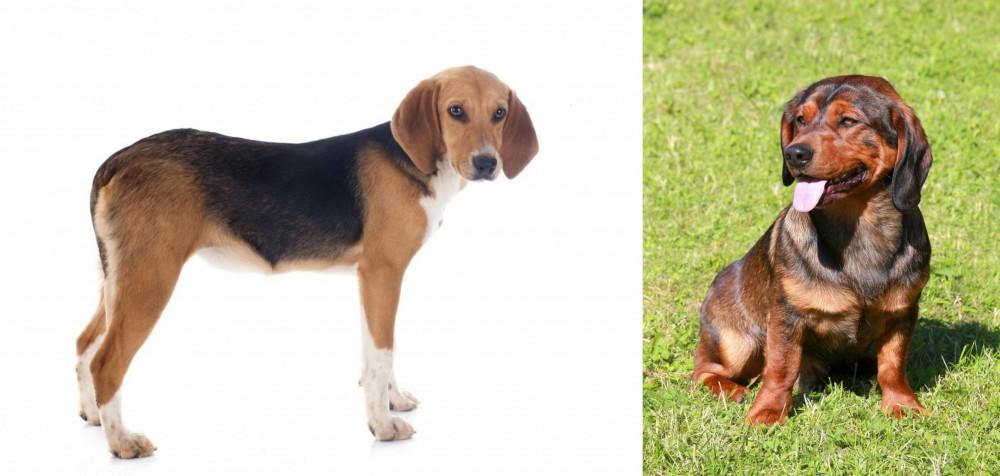Beagle-Harrier vs Alpine Dachsbracke