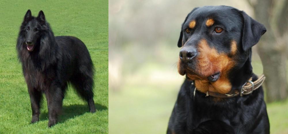 Belgian Shepherd Dog (Groenendael) vs Rottweiler