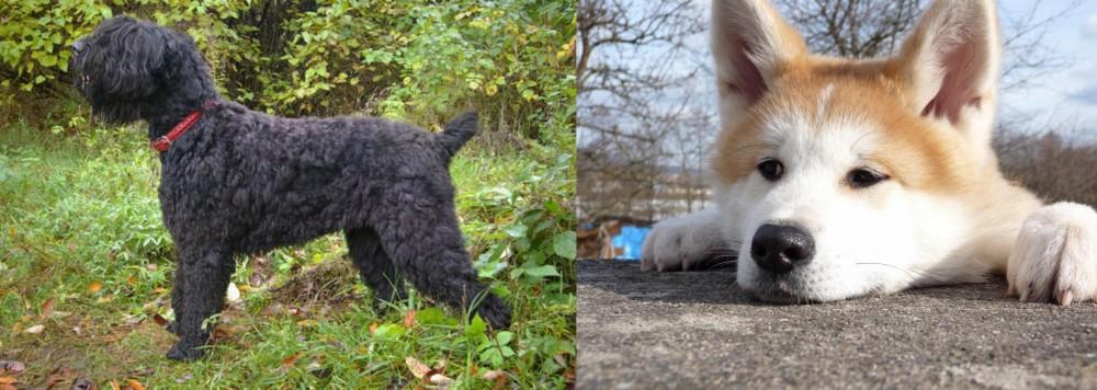 Black Russian Terrier vs Akita