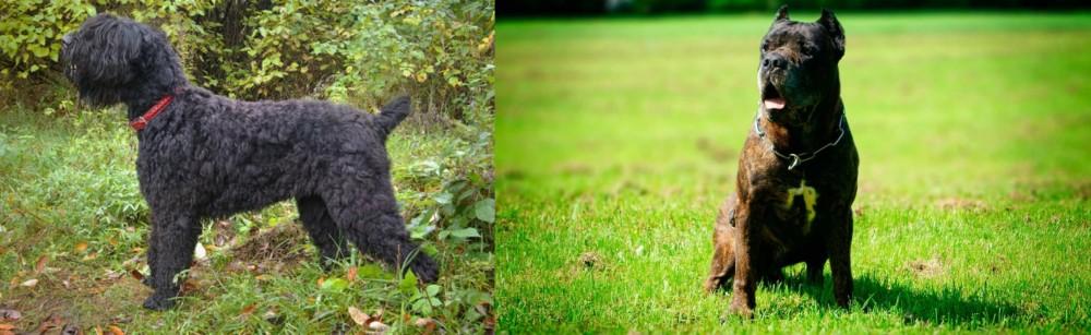 Black Russian Terrier vs Bandog