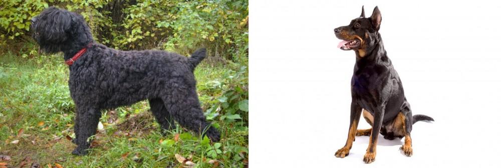 Black Russian Terrier vs Beauceron