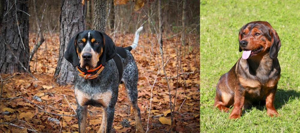 Bluetick Coonhound vs Alpine Dachsbracke