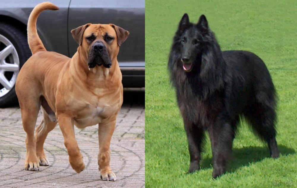 Boerboel vs Belgian Shepherd Dog (Groenendael)