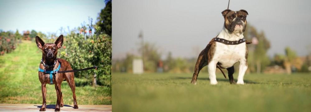 Bospin vs Bantam Bulldog