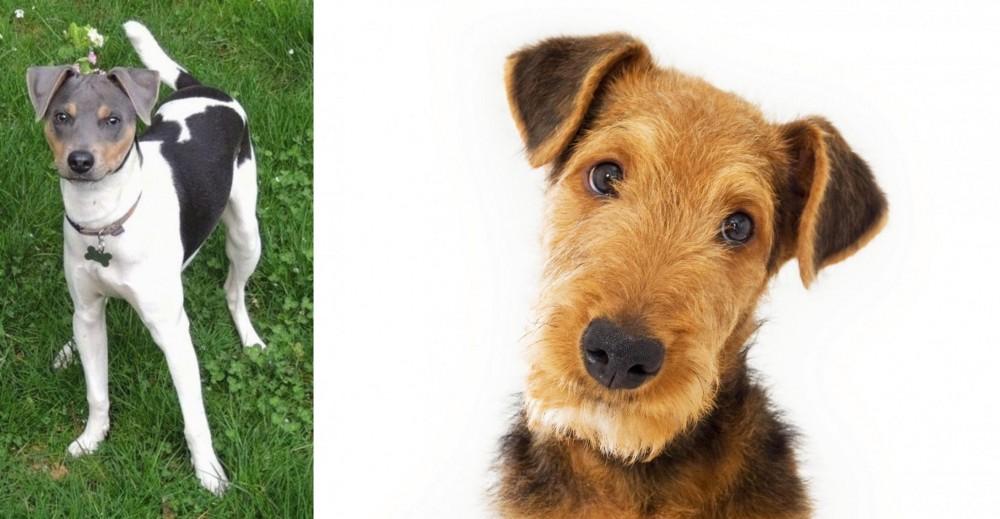 Brazilian Terrier vs Airedale Terrier
