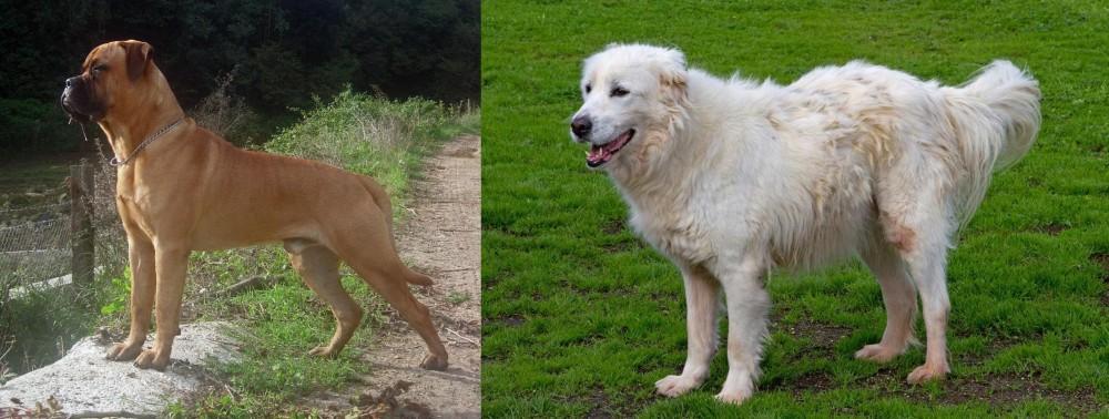 Bullmastiff vs Abruzzenhund