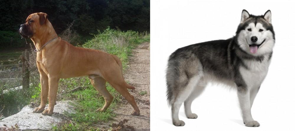 Bullmastiff vs Alaskan Malamute
