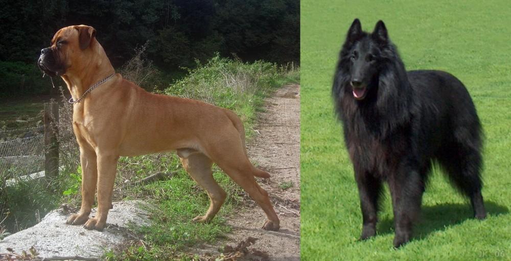Bullmastiff vs Belgian Shepherd Dog (Groenendael)