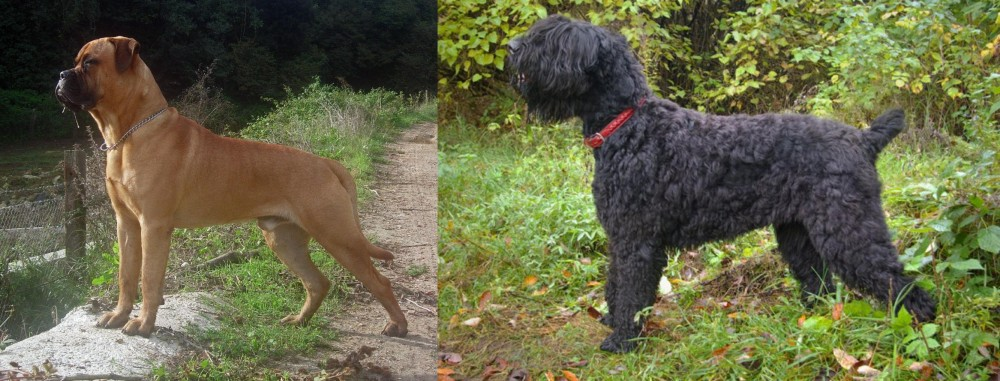 Bullmastiff vs Black Russian Terrier