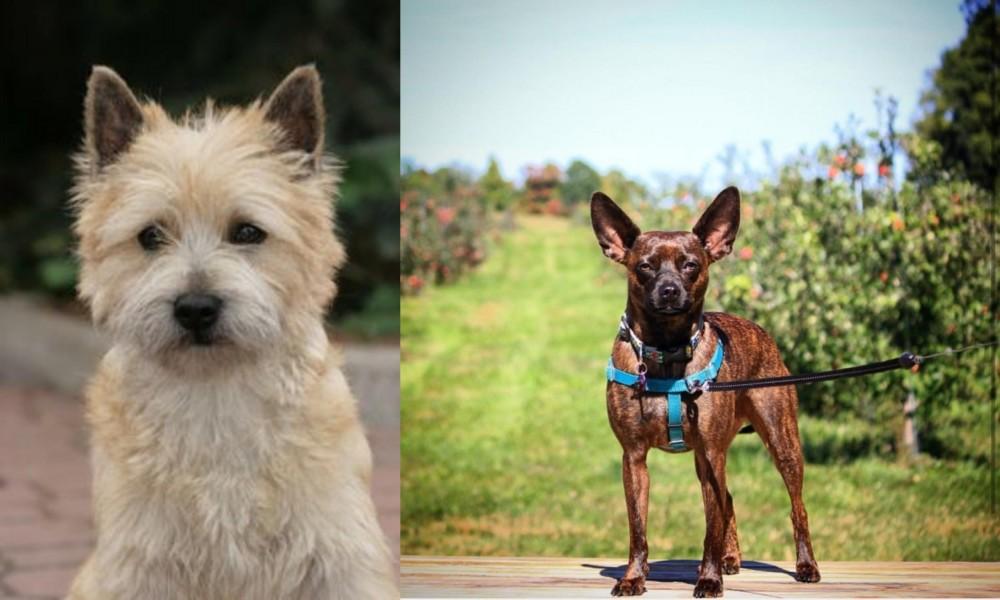 Cairn Terrier vs Bospin