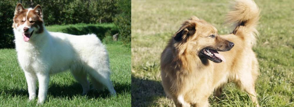 Canadian Eskimo Dog vs Basque Shepherd