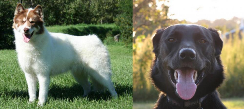 Canadian Eskimo Dog vs Borador