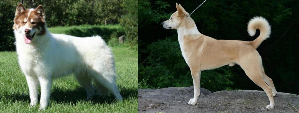 Canadian Eskimo Dog vs Canaan Dog