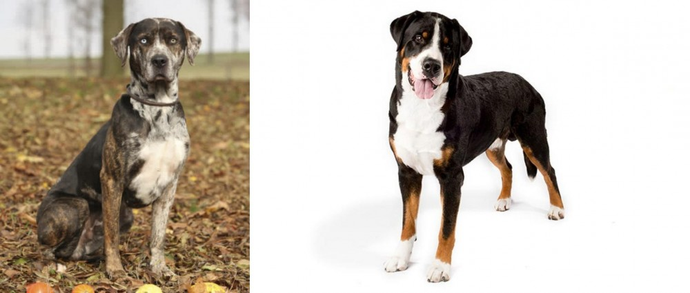 Greater Swiss Mountain Dog vs Catahoula Leopard - Breed ...