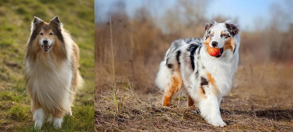 Collie vs Australian Shepherd