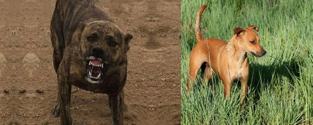 Dogo Sardesco vs Africanis