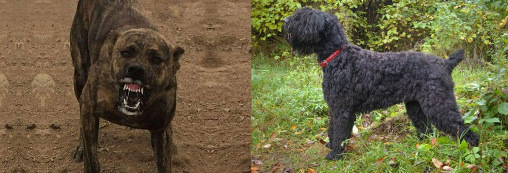 Dogo Sardesco vs Black Russian Terrier