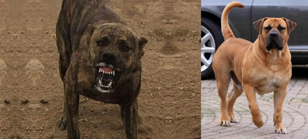 Dogo Sardesco vs Boerboel