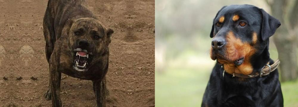 Dogo Sardesco vs Rottweiler