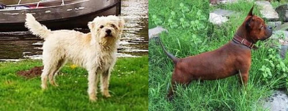 Dutch Smoushond vs Chinese Chongqing Dog