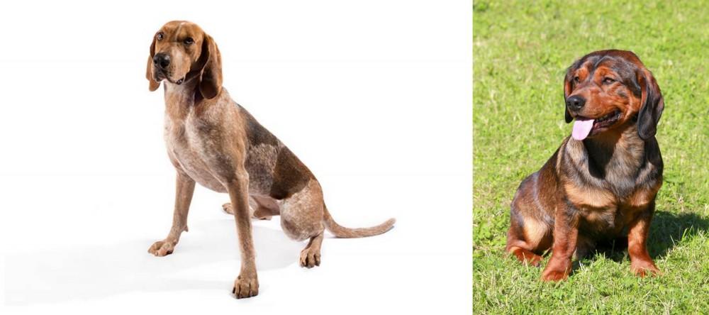 English Coonhound vs Alpine Dachsbracke