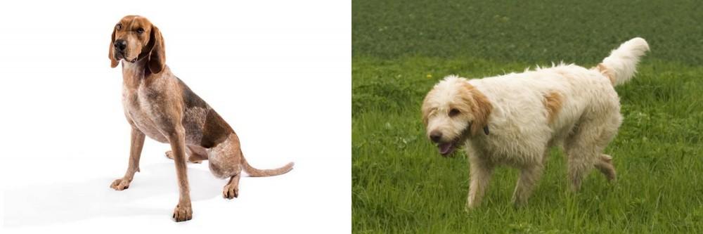 English Coonhound vs Briquet Griffon Vendeen
