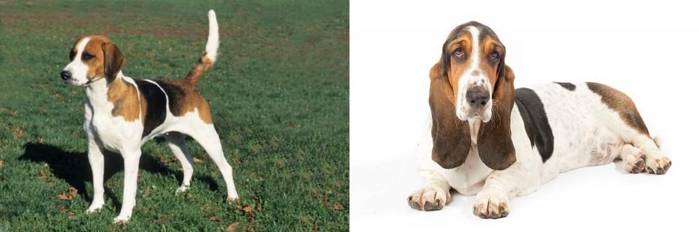 English Foxhound vs Basset Hound
