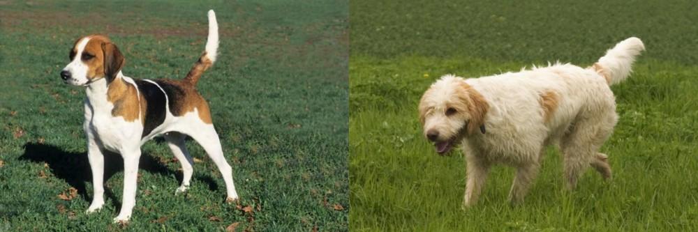 English Foxhound vs Briquet Griffon Vendeen