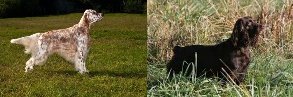 English Setter vs Boykin Spaniel