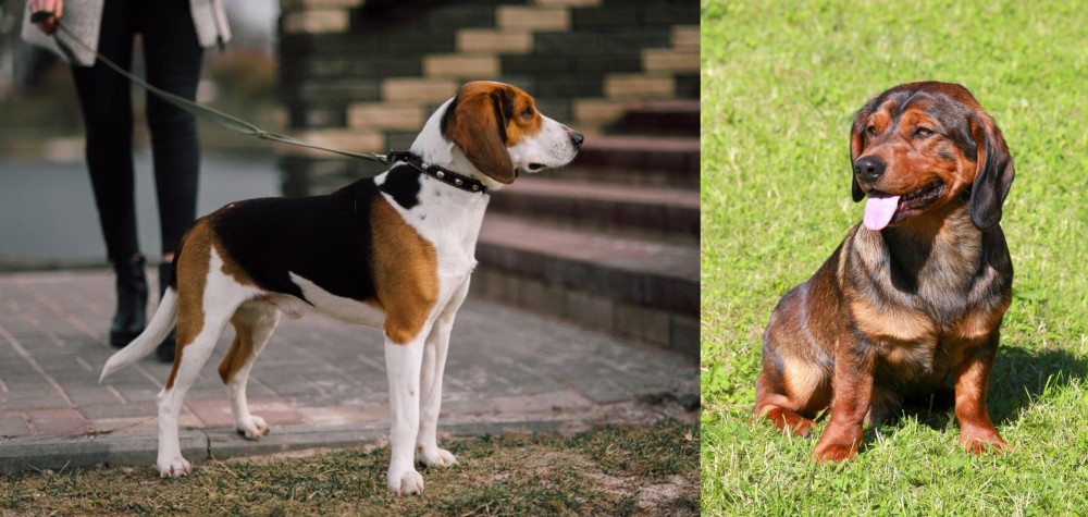 Estonian Hound vs Alpine Dachsbracke