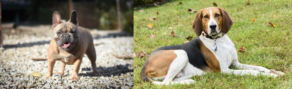 American English Coonhound vs French Bulldog