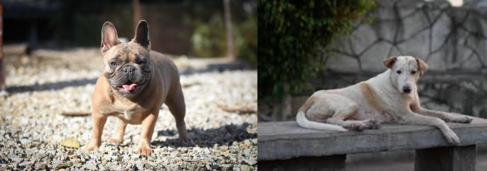 Askal vs French Bulldog