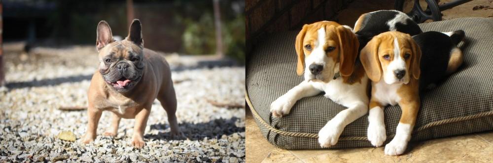 Beagle vs French Bulldog