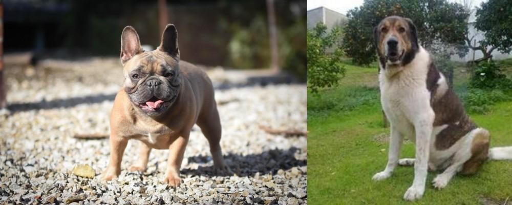 Cao de Gado Transmontano vs French Bulldog