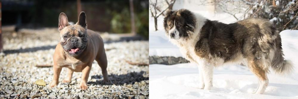 Caucasian Shepherd vs French Bulldog