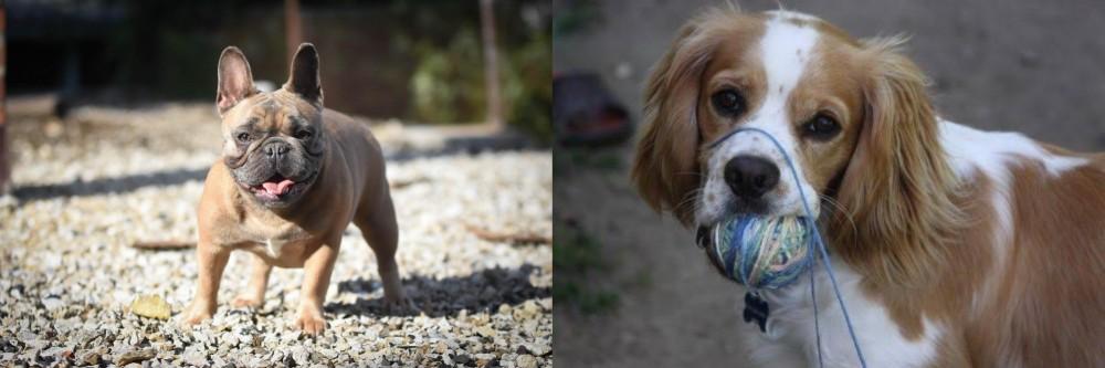 Cockalier vs French Bulldog