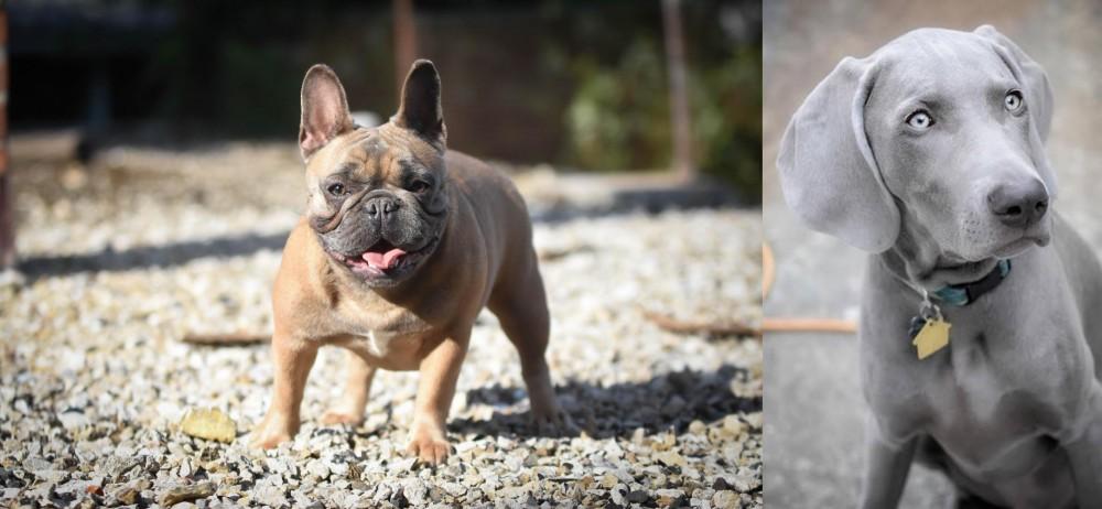 Weimaraner vs French Bulldog