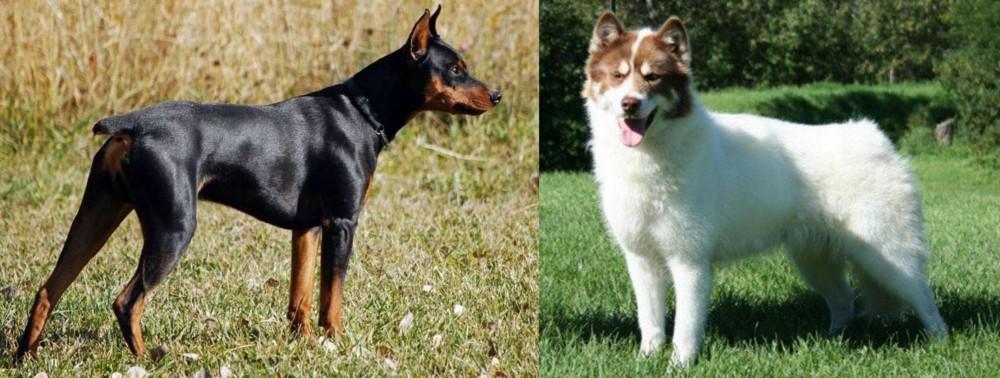 German Pinscher vs Canadian Eskimo Dog