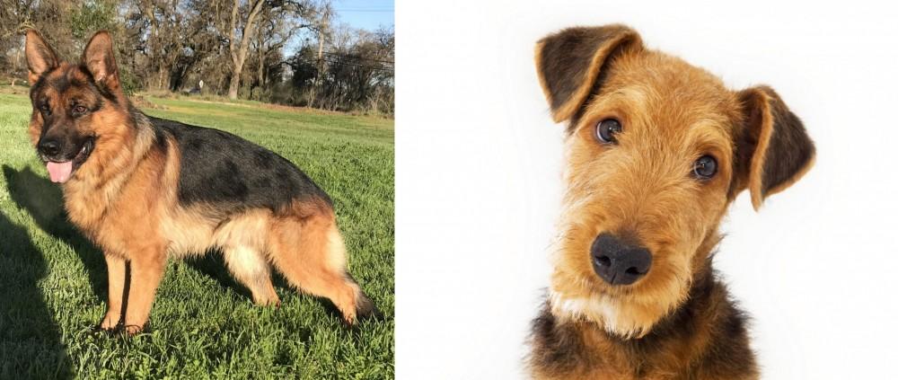 Airedale Terrier vs German Shepherd