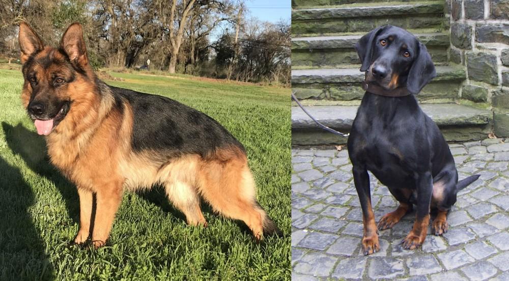 Austrian Black and Tan Hound vs German Shepherd