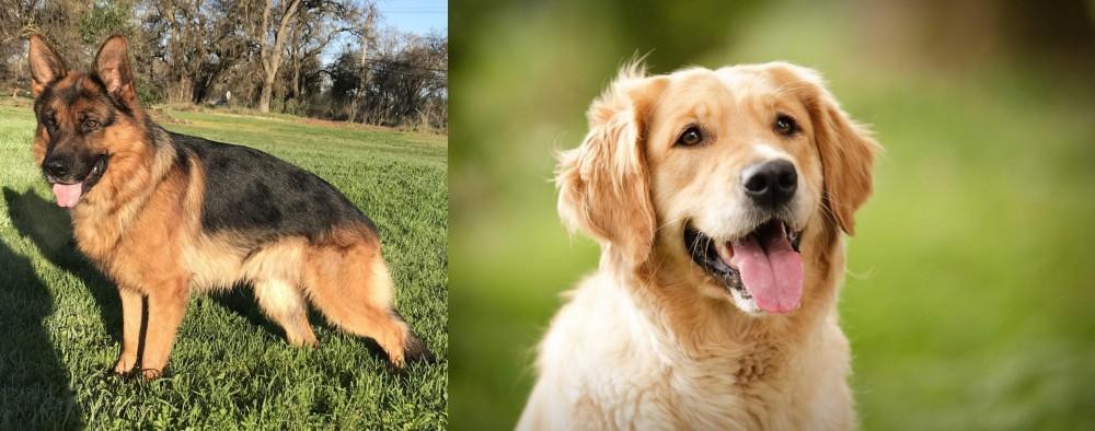 Golden Retriever vs German Shepherd