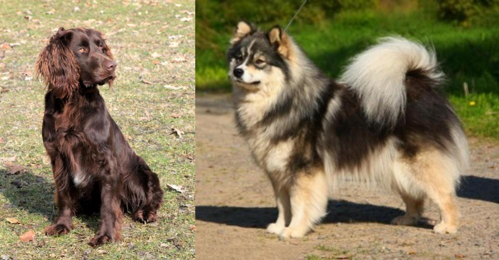German Spaniel vs Finnish Lapphund