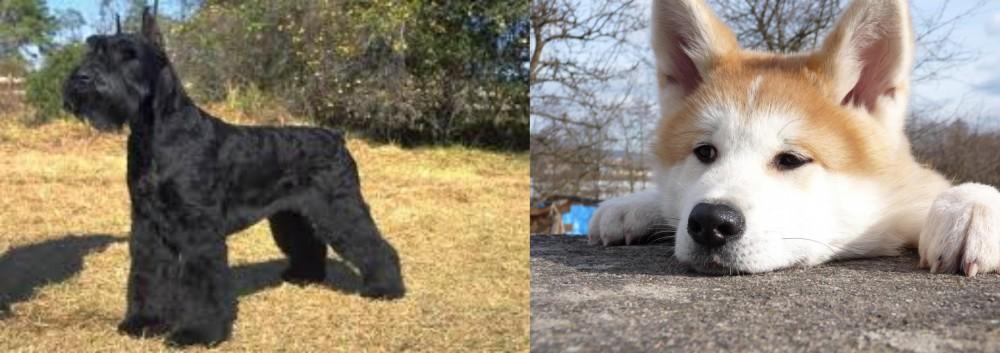 Giant Schnauzer vs Akita