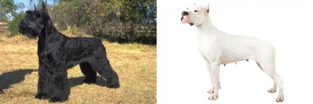 Giant Schnauzer vs Argentine Dogo